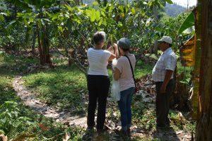 Patenbäume auf Don Bonifacios Plantage